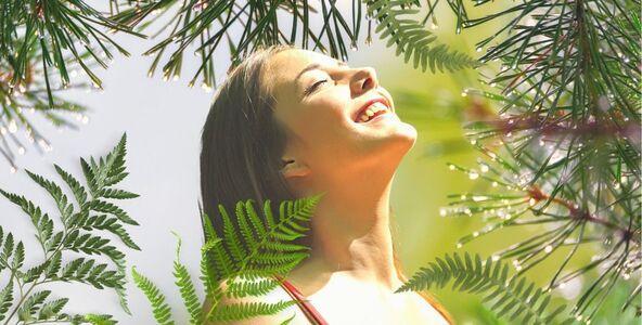 Borovice & terapie lesem